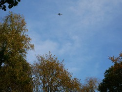 Light aircraft flying over the woods against a blue sky