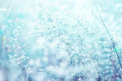 Light airy spring summer natural background in blue tones with blurred focus. Wild grass sways in wind in nature outdoors close-up.