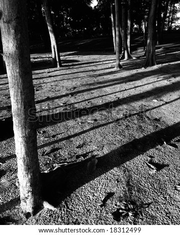 light and shadow at play by the morning light