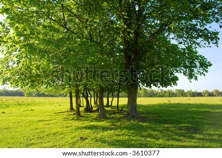Light and shadow - group of trees in summer field. Shot in Ukraine.
