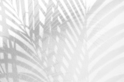 Light and shadow leaves,palm leaf on grunge white wall concrete background.Silhouette abstract tropical leaf natural pattern for wallpaper, spring,summer texture.Black and white blurred image backdrop