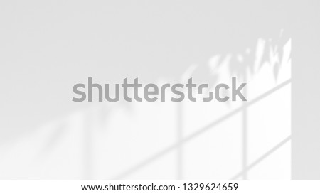 light and shadow of window frame and tree leaves on white wall . 3d rendering image