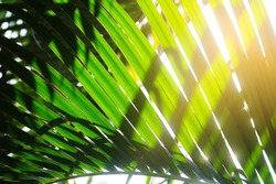 light and shadow on tropical palm leaf, green nature background