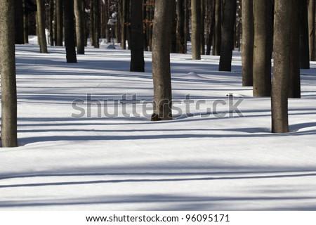 Light and Shadow - Winter Beech Forest