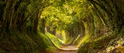 Light at the end of the tunnel. Halnaker tree tunnel in West Sussex UK photographed in autumn with sunlight shining through the branches. This is the original Roman road from London to Chichester.