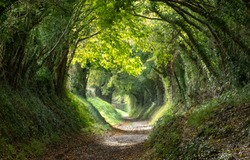 Light at the end of the tunnel. Halnaker tree tunnel in West Sussex UK with sunlight shining in through the branches. This is the original Roman road from London to Chichester.
