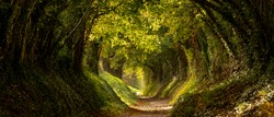 Light at the end of the tunnel. Halnaker tree tunnel in West Sussex UK with sunlight shining in through the branches. Symbolises hope during the Coronavirus Covid-19 pandemic crisis.
