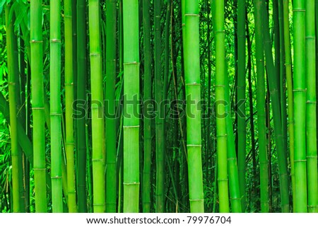 light bamboo