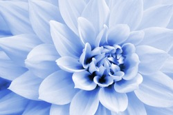 Light blue and white dahlia flower macro photo. Picture in color emphasizing the light pastel blue colours and purple shadows in an intricate geometric pattern.