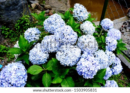 Light Blue Flowers Bunch with beautiful bunch