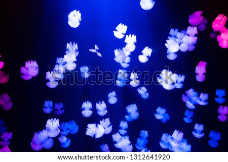 Light blue jellyfish under the water in aquarium, marine life concept  #1312641920