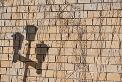 Light brown brick wall texture with dry creeper stalks and lamppost shadow as abstract background.