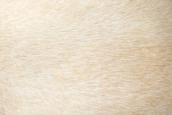Light brown dog fur patterns texture , Nature animal background