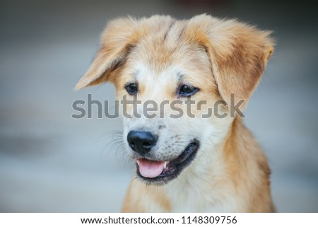 Light brown puppy with clumsily cute look, selective focus. #1148309756
