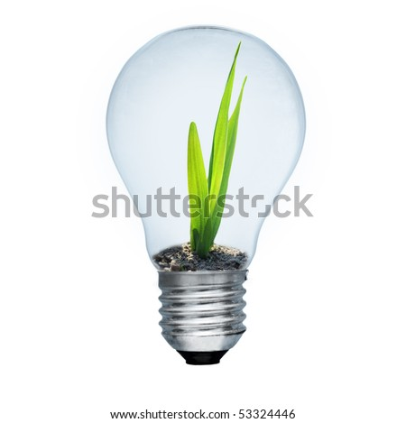 Light bulb and green sprout inside. Saving energy concept. Image isolated on white