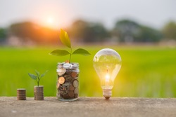 Light bulb Energy saving and a coin glass on the floor nature background