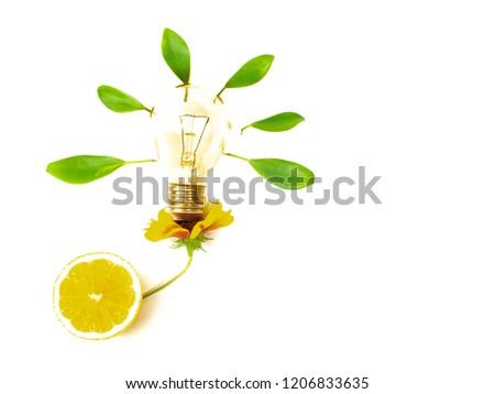 light bulb, incandescent lamp