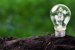 Light bulb plant in soil as idea or energy concept