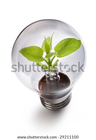 light bulb: power and nature