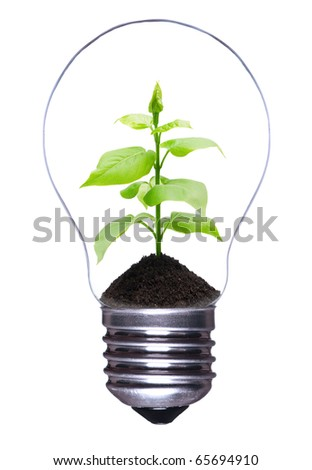 Light bulb with a growing plant inside isolated on white background