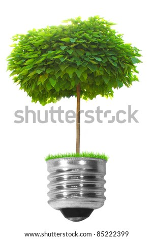 light bulb with a tree isolated on a white background