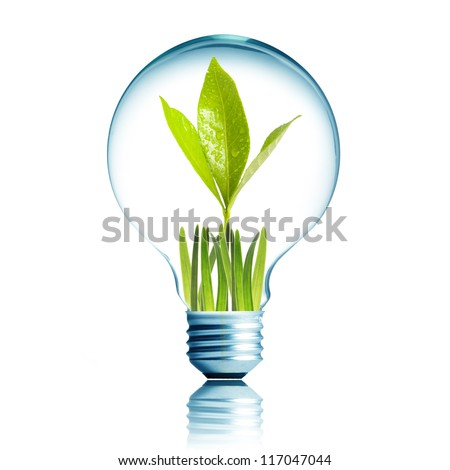 Light Bulb with green grass and green plant sprout inside