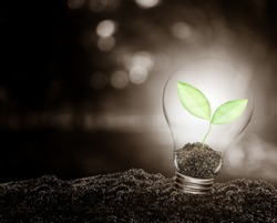 Light bulb with plant growing inside on soil ecology, Concept of conserve environment.