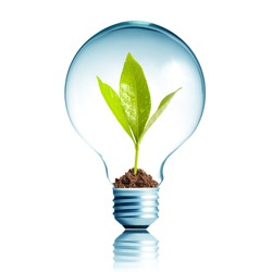 Light Bulb with soil and green plant sprout inside