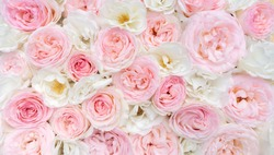 Light floral background. White and pink roses close-up top view with space for text. Wedding background of delicate roses.
