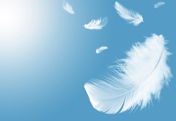 Light fluffy a white feathers floating in the sky with copy space. Feather abstract. Freedom concept background.