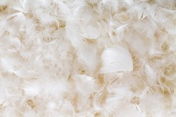 Light fluffy white feather background texture of goose or duck down in a full frame view conceptual of luxury and elegance