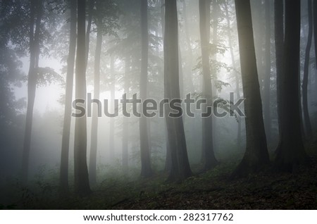 Stock Photo light glowing in a foggy forest