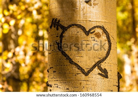 Light glowing on carved heart in Aspen tree trunk