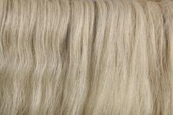 Light gray horse hair, mane