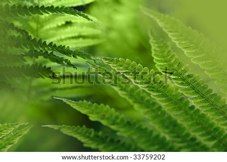 Light green background with fern leaves
