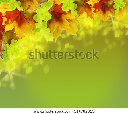 Light green shining background with colored autumn leaves