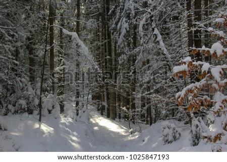 light in a dark winter forest ez canvas