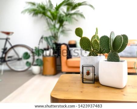 Light modern living room with an urban jungle feeling thanks to numerous houseplants and a preserved colorful beetle