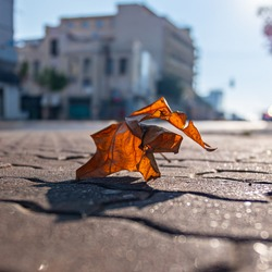 Light of vintage leave urban background. The concept of the fall. Orange leaf on the city ground. One fallen leaves on the ground of orange, yellow, brown color. Close up of object from the winter.