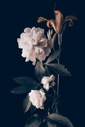 light peony and garden flowers, foliage, dark background.