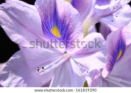 Light pink flowers splashed with purple and yellow.