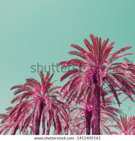 Light pink palm trees and blue sky in infrared style. Tropical travel concept. Minimalism and soft colors