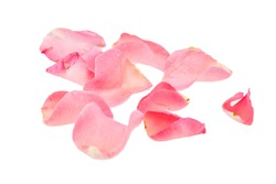 Light pink rose petal on white background