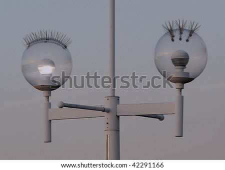 Light posts with bristles to stop birds from landing