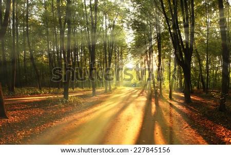 light rays fall landscape trees #227845156