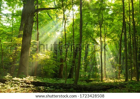 Light shining down in nature
