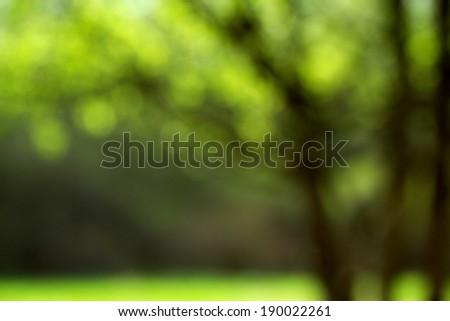 Light shining on tree leaves