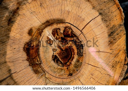 Light wood cross section. cross-section of a tree. industry.