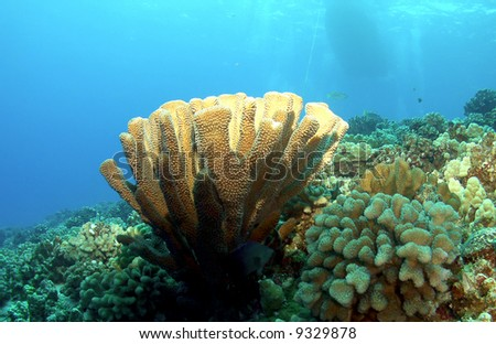 Lighted Coral Head on reef with Boat in the Background