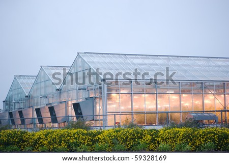 lighted greenhouse in the rain